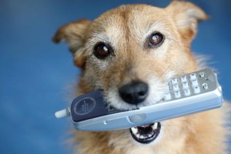 Dog-Phone (1)