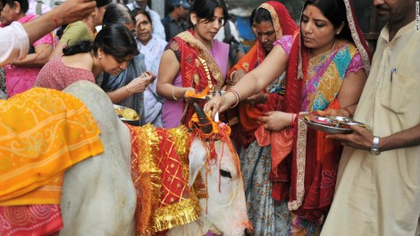 hindu-sacred-cow