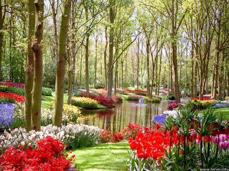garden at lake
