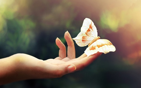 white butterfly hand animal insect