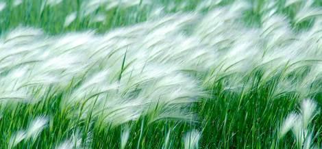 windy field