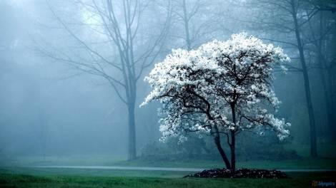 tree fog garden