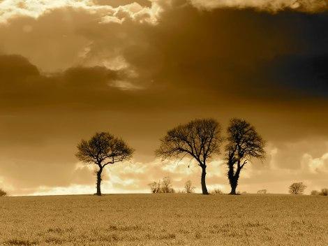 three-trees-horizon-wallpapers