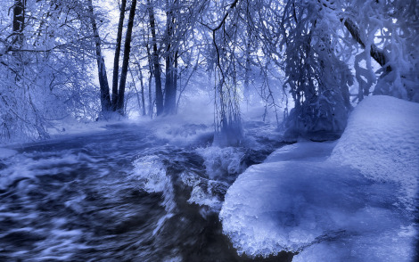forest_river