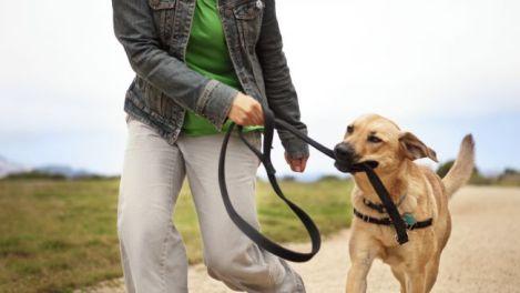walking-dog leash