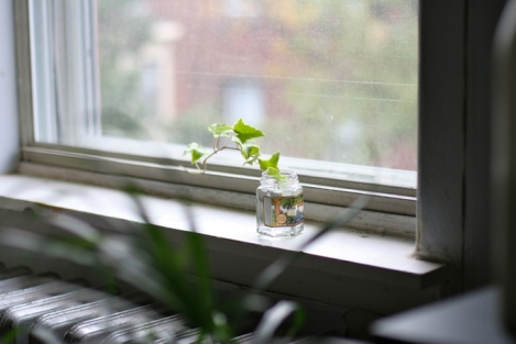 window-sill