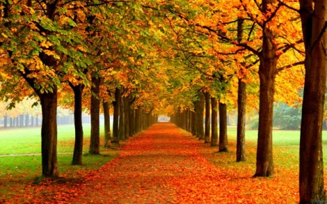 autumn_leaves_on_road