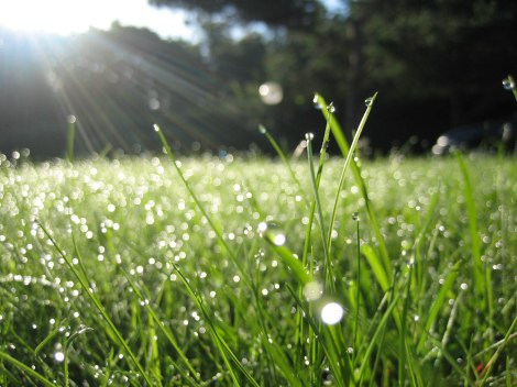 morning-dew-drops-best-hd-widescreen-wallpapers-free-nature-photos