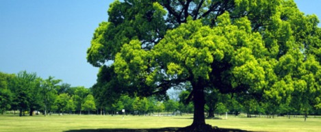 large tree park