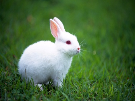 White Rabit picture
